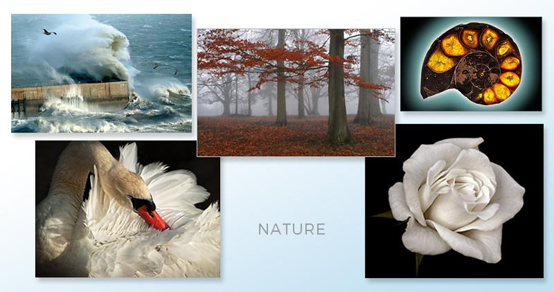 Landscapes, Plants, Wildlife and Macro